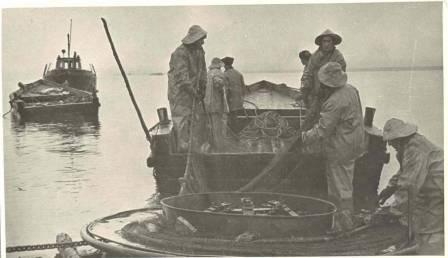 Добыча рыбы  1955 год