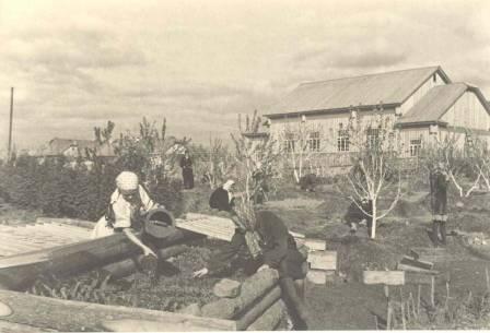 Семилетняя школа №3. Учебно-опытный сад, возделанный юнатами  1956 год